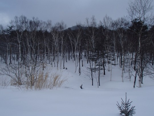 東北の雪深いの風景